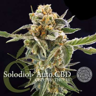 Solodiol Auto CBD seeds - Elite Seeds, Cuttings and seeds